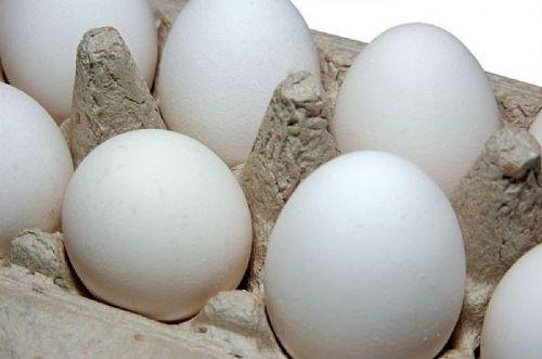 eggshealth